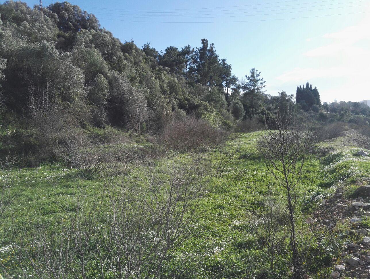 Seferihisar Yeni Orhanlıda Satılık Zeytin Ağaçlı Tarla